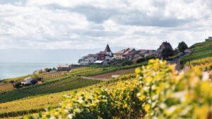 vineyards in Lake Geneva, France