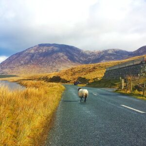 Self Drive Tour of Ireland